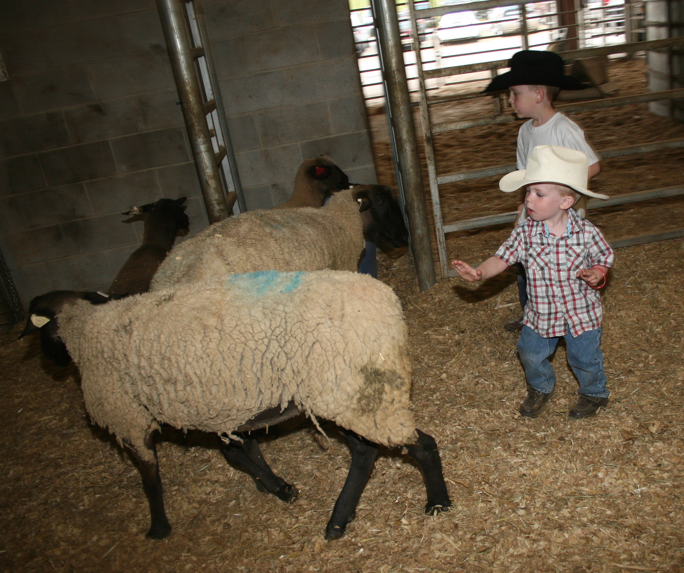 Children play with the sheep during the petting zoo portion of the Great Southland Stampede Rodeo.