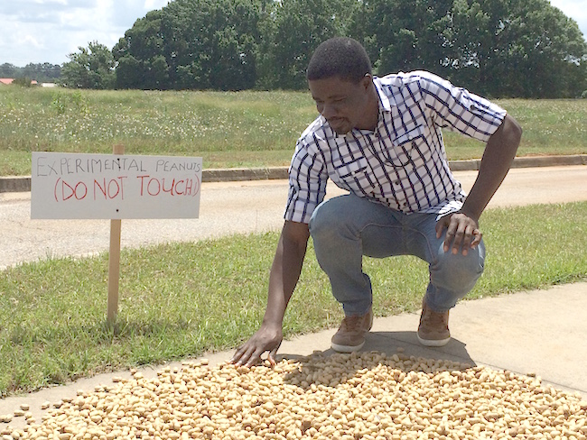 A native of Ghana, Maxwell Lamptey is visiting the University of Georgia in the hopes of learning new methods of fighting aflatoxin—a carcinogen produced by soil fungus that can grow on peanuts. Lamprey is working alongside UGA food scientist Jinru Chen on the university's campus in Griffin, Ga. He is studying different methods of solar drying peanuts.