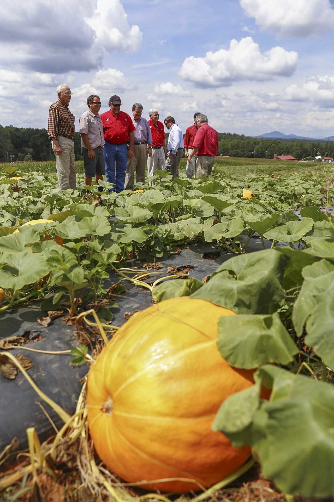 Georgia Commissioner of Agriculture Gary Black examines a pumpkin field at Jaemor Farms with farm manager Drew Echols, Rep. Terry England, UGA President Jere Morehead, CAES Dean J. Scott Angle and other officials during the UGA President's Third Annual Farm Tour.