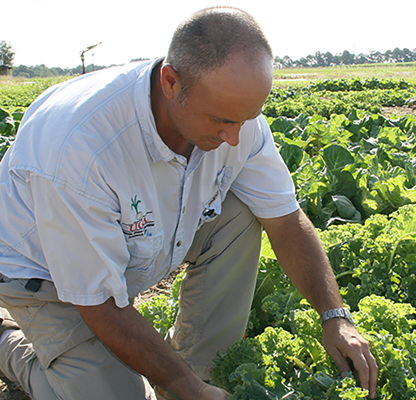 UGA horticulturist Tim Coolong is studying different varieties of kale on the UGA Tifton Campus.