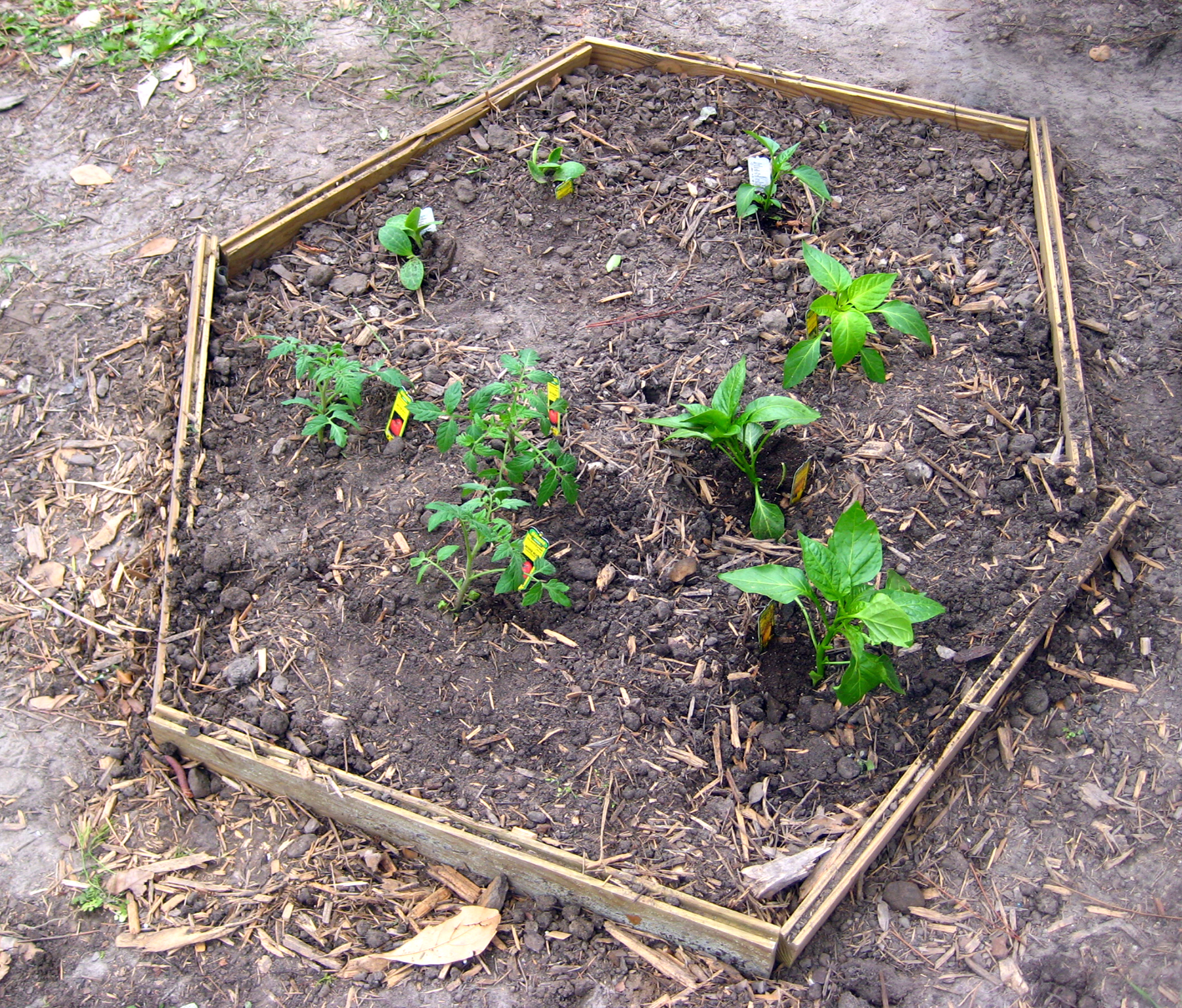 Members of professional agricultural sorority Sigma Alpha planted a pizza garden at Charles Ellis Elementary School in Savannah, Ga., in March 2010.