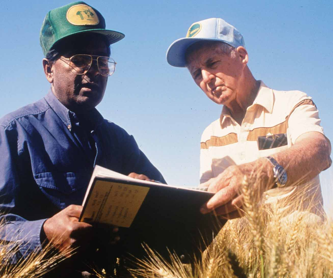 Sangaya Rajaram and Norman Borlaug working in wheat fields in Mexico.