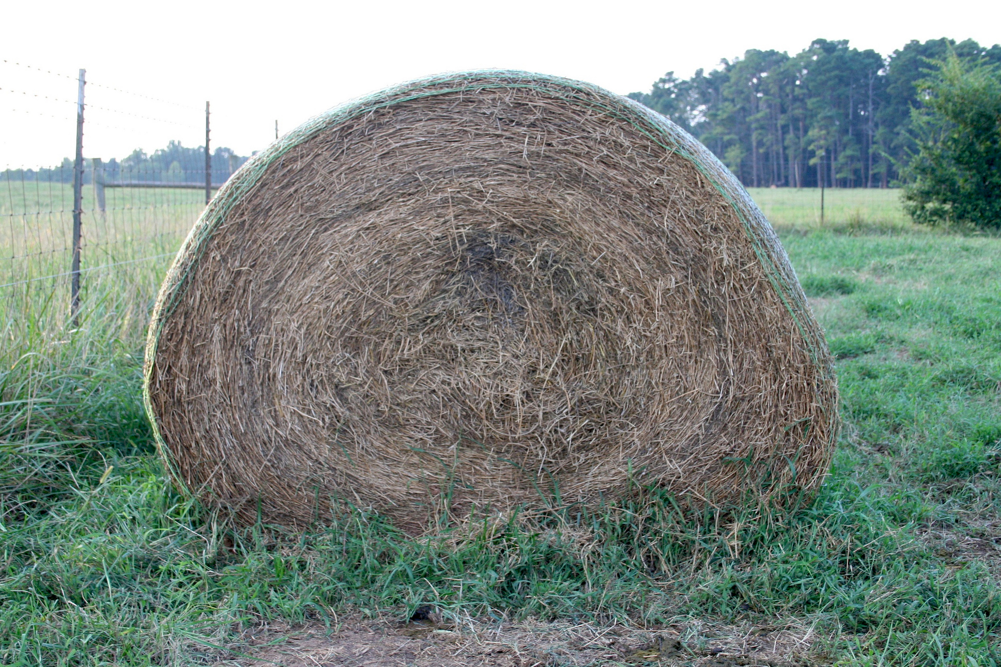 To determine the quality of hay, Georgia farmers trust forage tests from the University of Georgia Agricultural and Environmental Services Laboratories in Athens, Georgia. The lab provides an estimate of Relative Forage Quality (RFQ). This value is a single, easy-to-interpret number that improves a producer's understanding of forage quality and helps to establish a fair market value for the product.