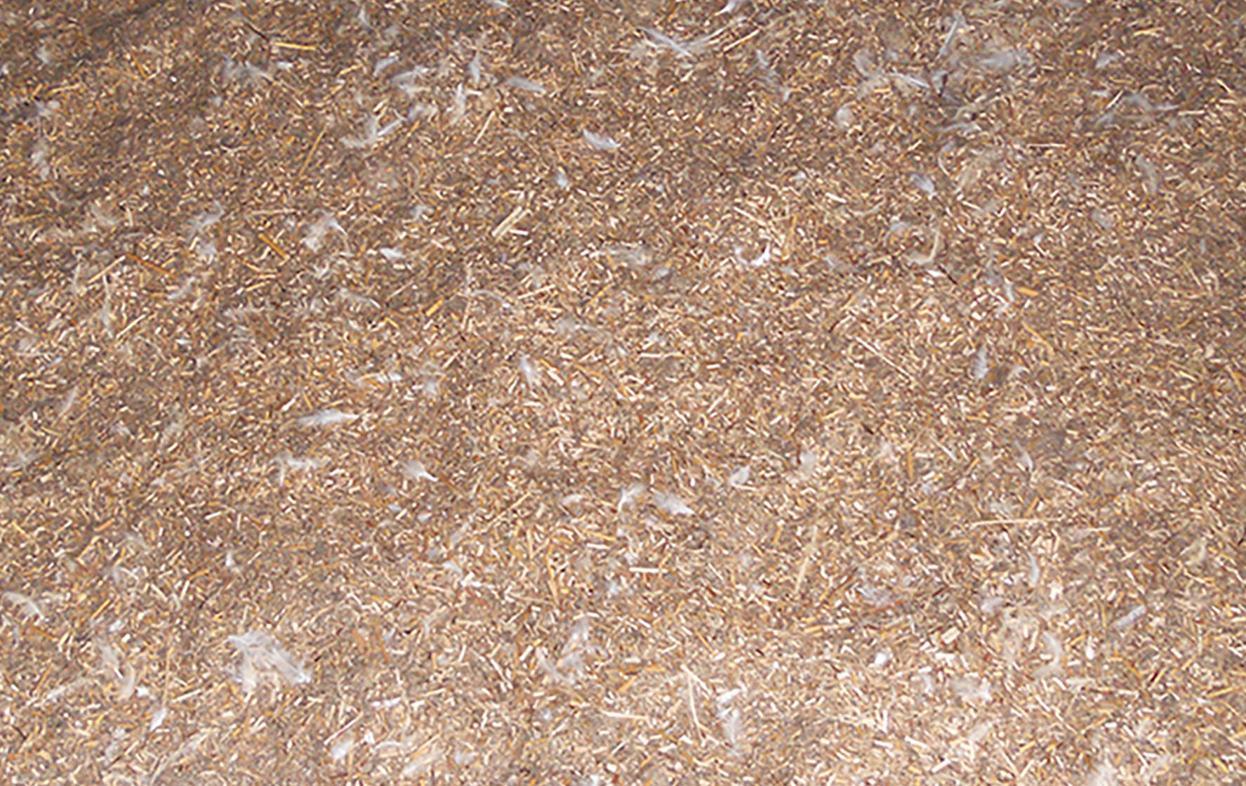 Pictured is miscanthus grass used as bedding in a poultry house.