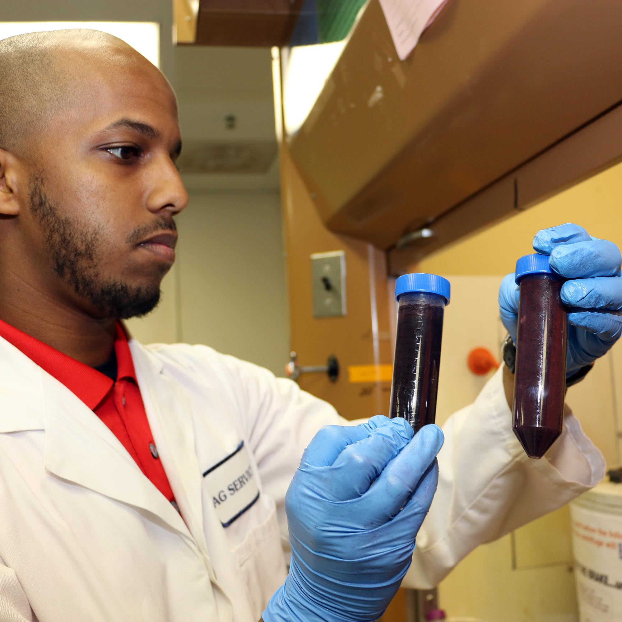 UGA Cooperative Extension Agricultural and Environmental Services Laboratories lab technician Alex Debese prepares grape juice samples for testing as part of the lab's wine grape testing program.