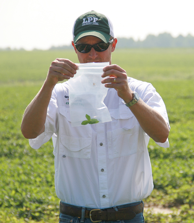 Mark Abney, UGA Extension peanut entomologist, advocates scouting for insects in peanut fields.