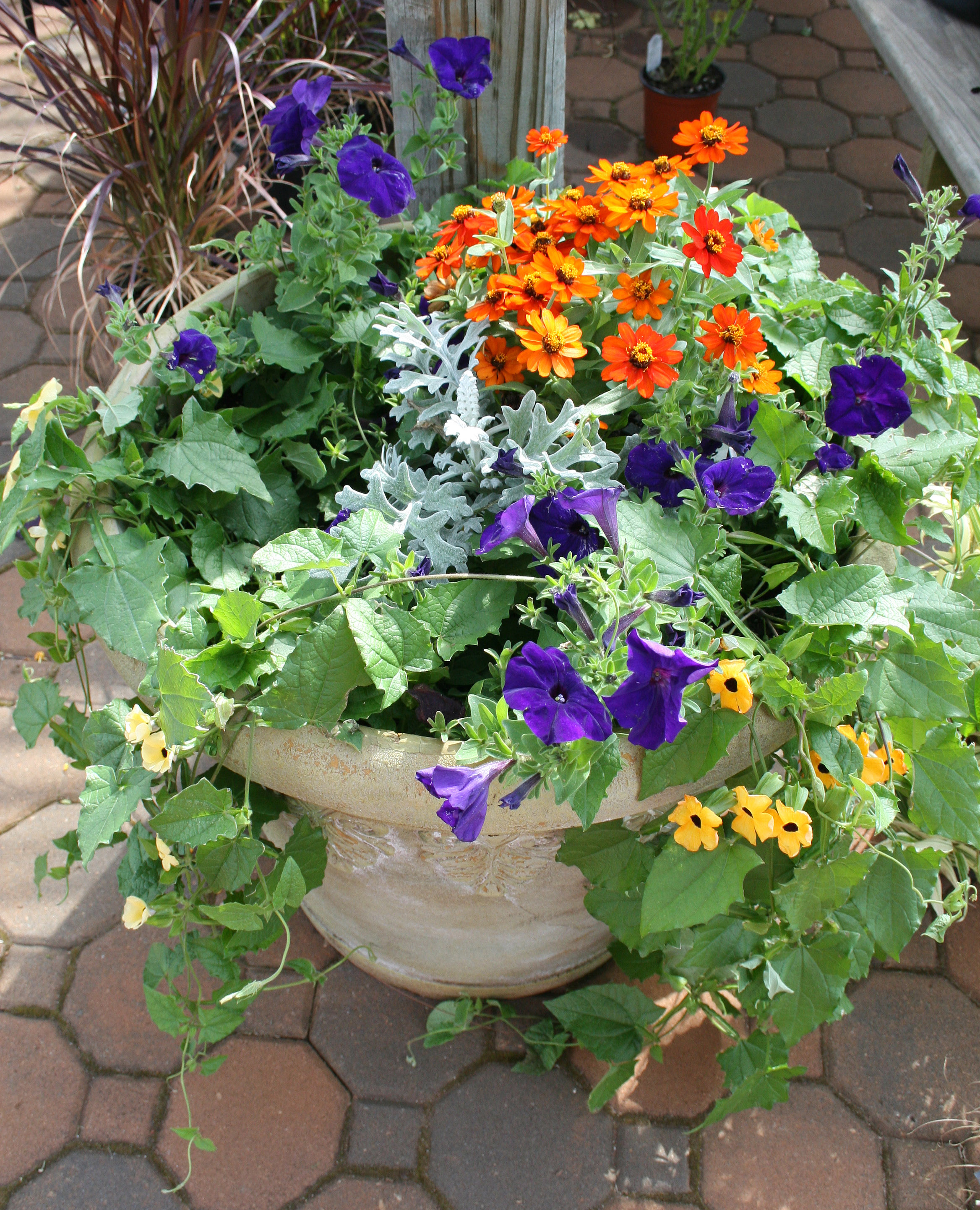 When creating a container garden, University of Georgia experts say remember to add plants of several different textures and heights.