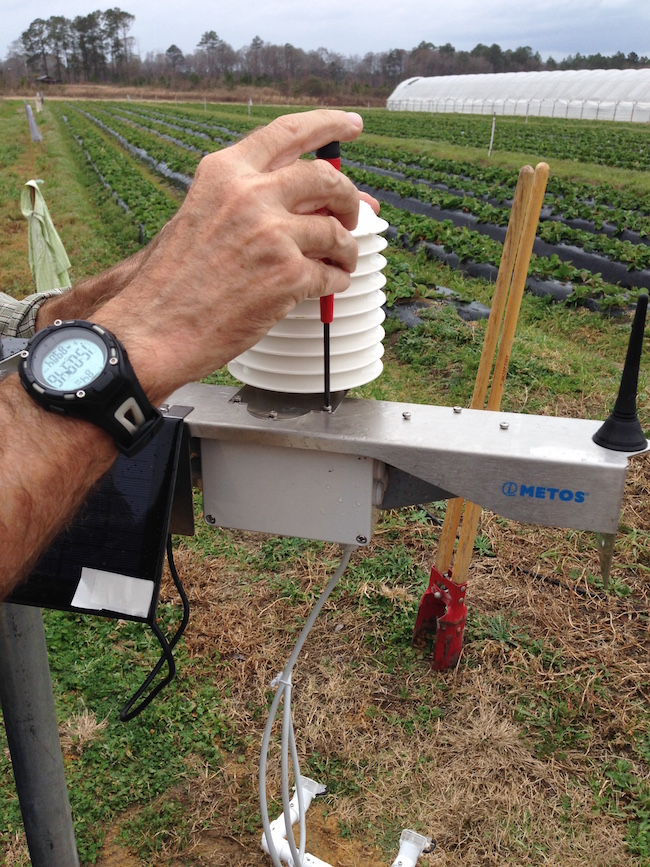 University of Georgia researchers are testing the use of temperature and leaf moisture monitors as a way to help farmers determine when to spray strawberries for diseases. The Strawberry Advisory System was developed by scientists at the University of Florida. The monitoring devices are shown being installed in a strawberry field in Baxley, Georgia.