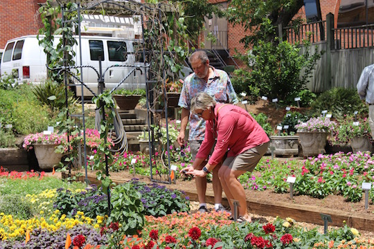 Greenhouse and nursery growers from across the southeastern United States converged in Athens June 12-15 for the inaugural Academy of Crop Production hosted by the UGA Department of Horticulture. Part of the program included the annual Industry Open House at the Trial Gardens at UGA.