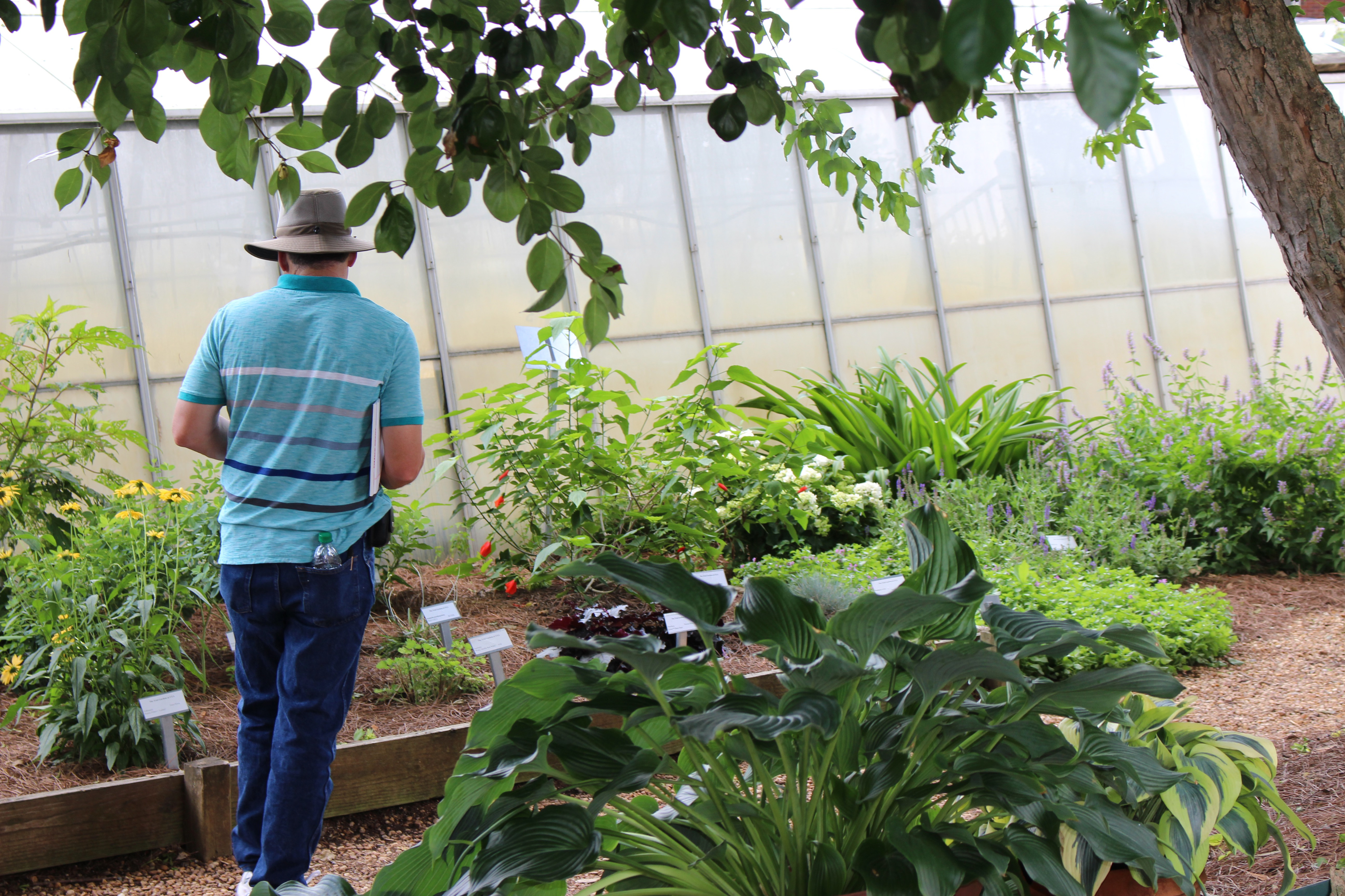 A nursery grower examines plants growing at the Trial Gardens at UGA. The gardens will hold a public open house July 9.