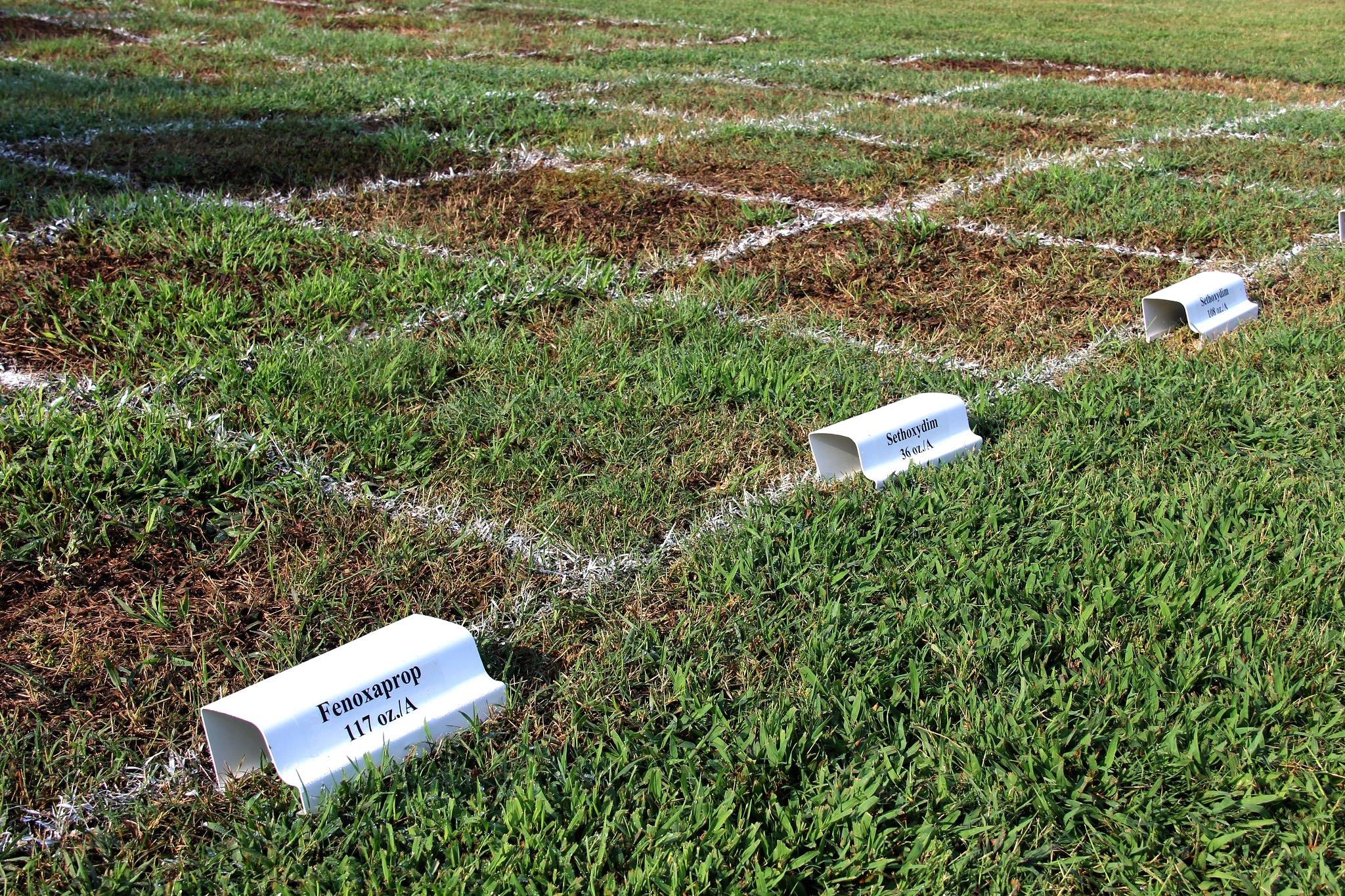 A herbicide trial on the turfgrass research plots at the University of Georgia campus in Griffin, Georgia.