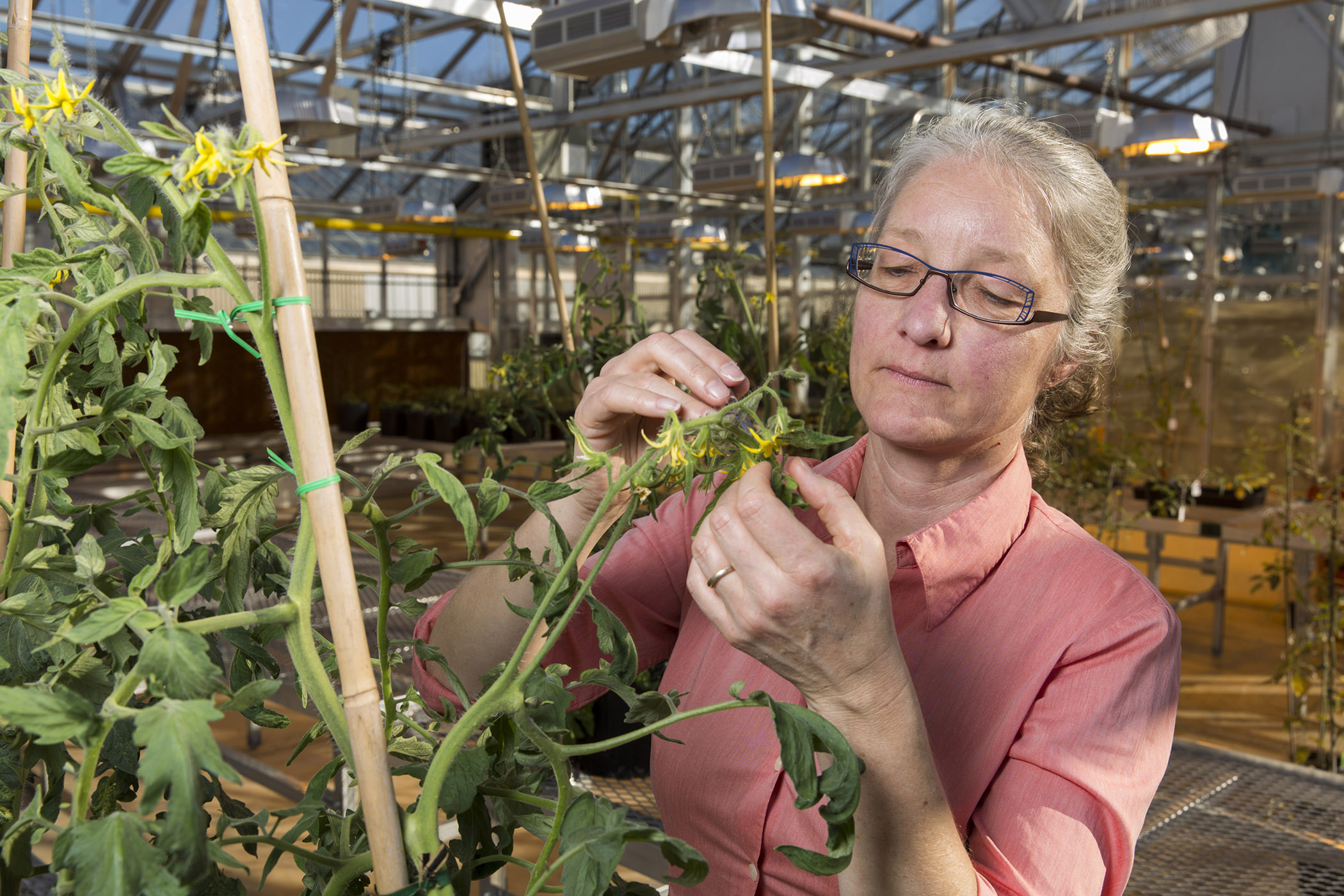 Esther van der Knaap, professor of horticulture, was one of the many UGA College of Agricultural and Environmental Sciences researchers who helped the college break its external research funding record in fiscal year 2016.