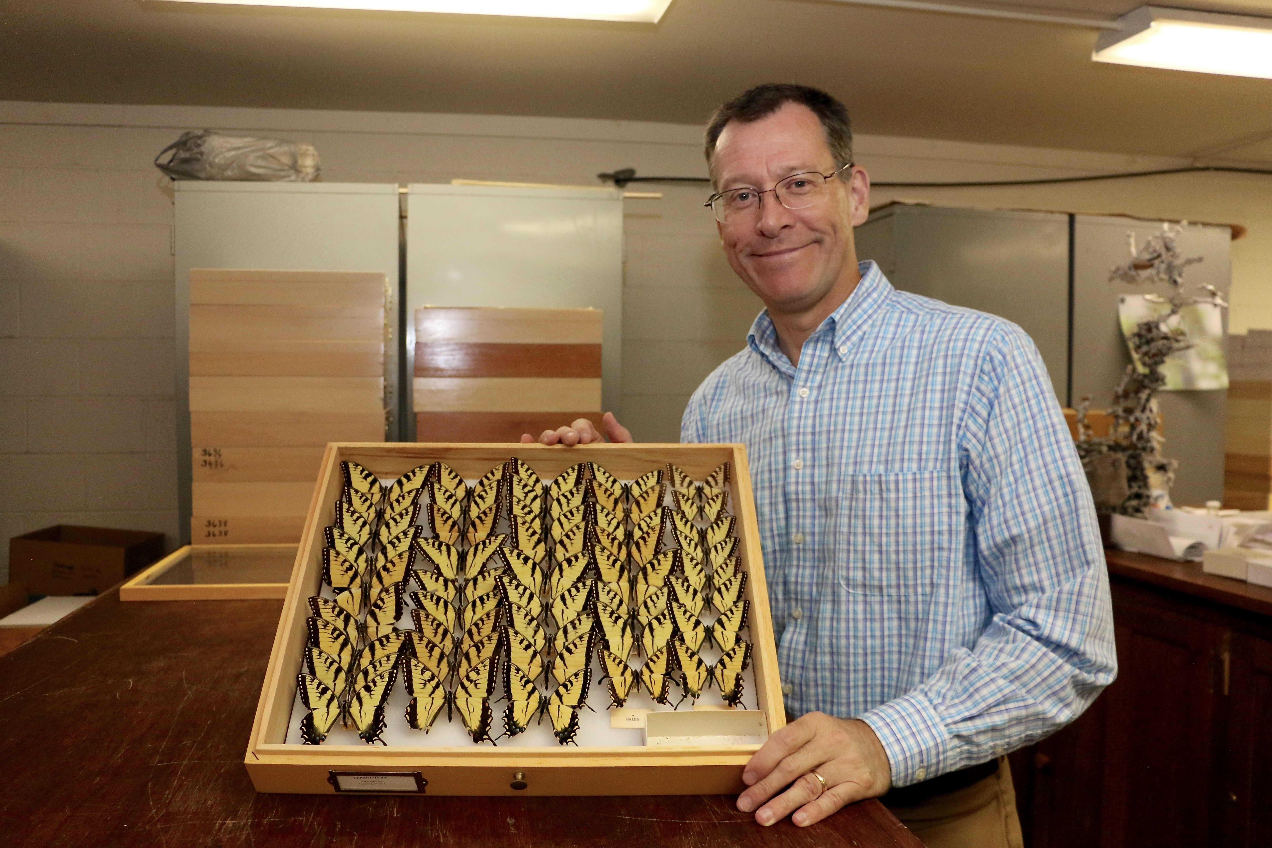 Joe McHugh, professor of entomology at the UGA College of Agricultural and Environmental Sciences and curator of the arthropod collection at the Georgia Museum of Natural History, is helping to lead a large multi-institution effort to digitize millions of butterfly and moth specimens across North America.