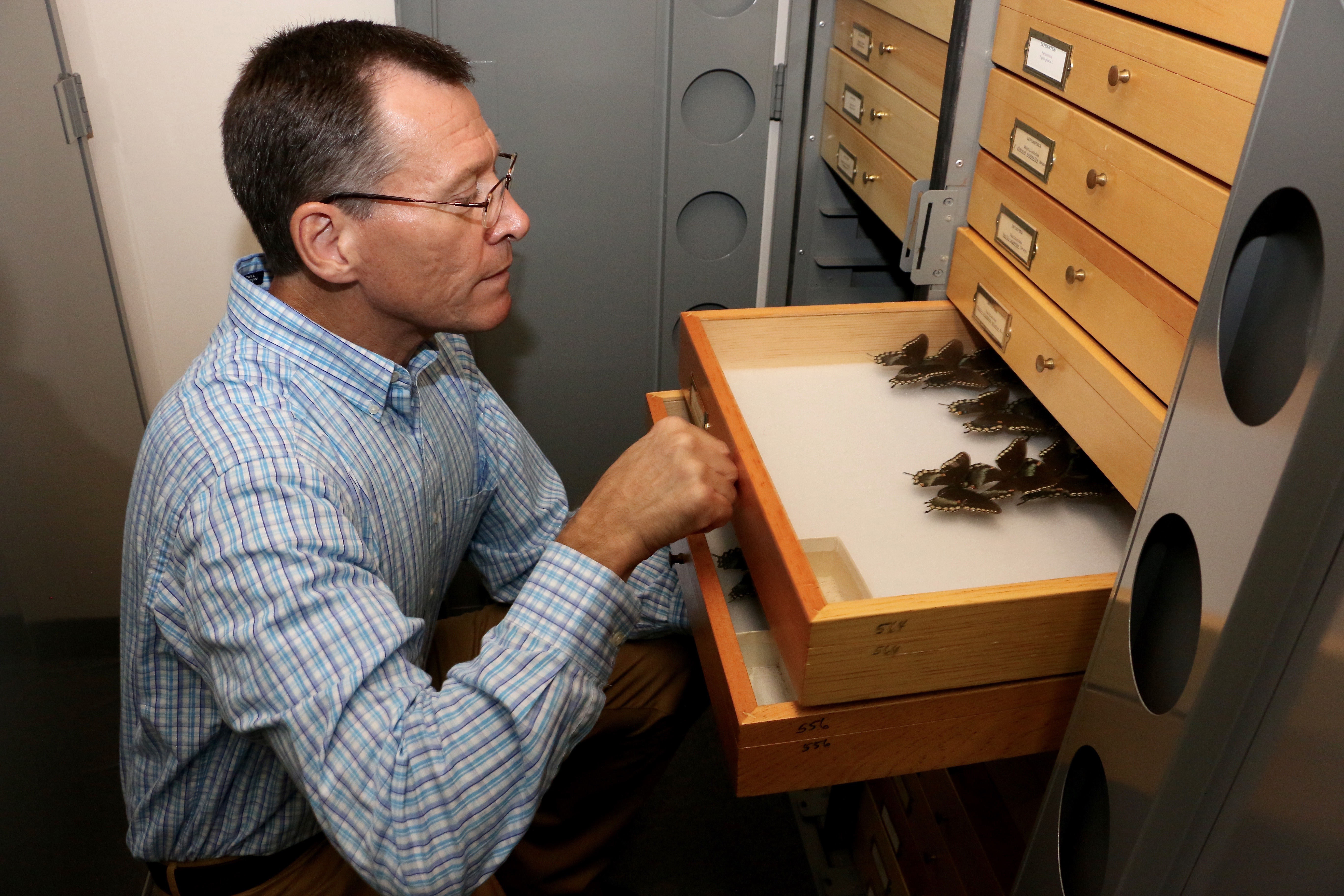 As part of the LepNet project, Joe McHugh, professor of entomology at the UGA College of Agricultural and Environmental Sciences and curator of the arthropod collection at the Georgia Museum of Natural History, will help lead the effort to digitize millions of butterfly and moth specimens now locked away in museum collections across the nation.