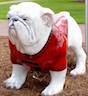 "The University of Georgia Griffin Campus has added a UGA Uga Bulldog statue to campus as one of its efforts to unify the campus with the greater university. The ""Big G"" on the western edge of campus was also recently renovated, just in time for football season."