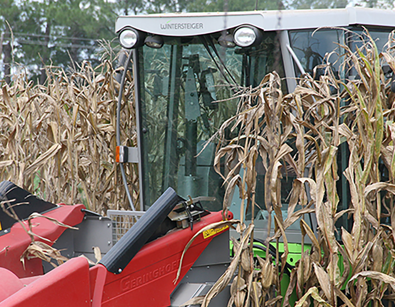 Corn is harvested on the UGA Tifton Campus on August 11, 2016.