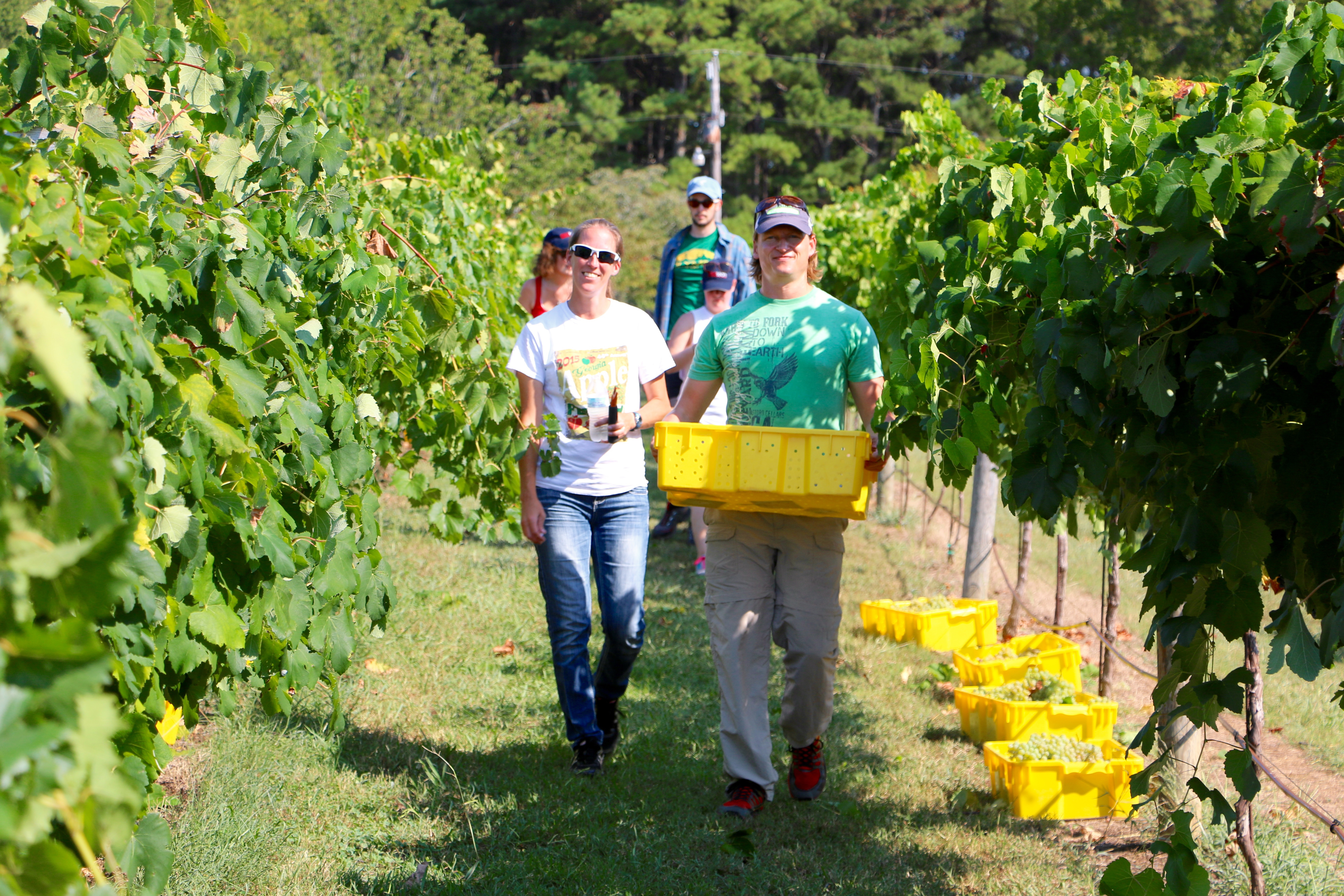 On August 16, UGA Extension specialists will offer aspiring wine makers a crash course on the wine industry.
