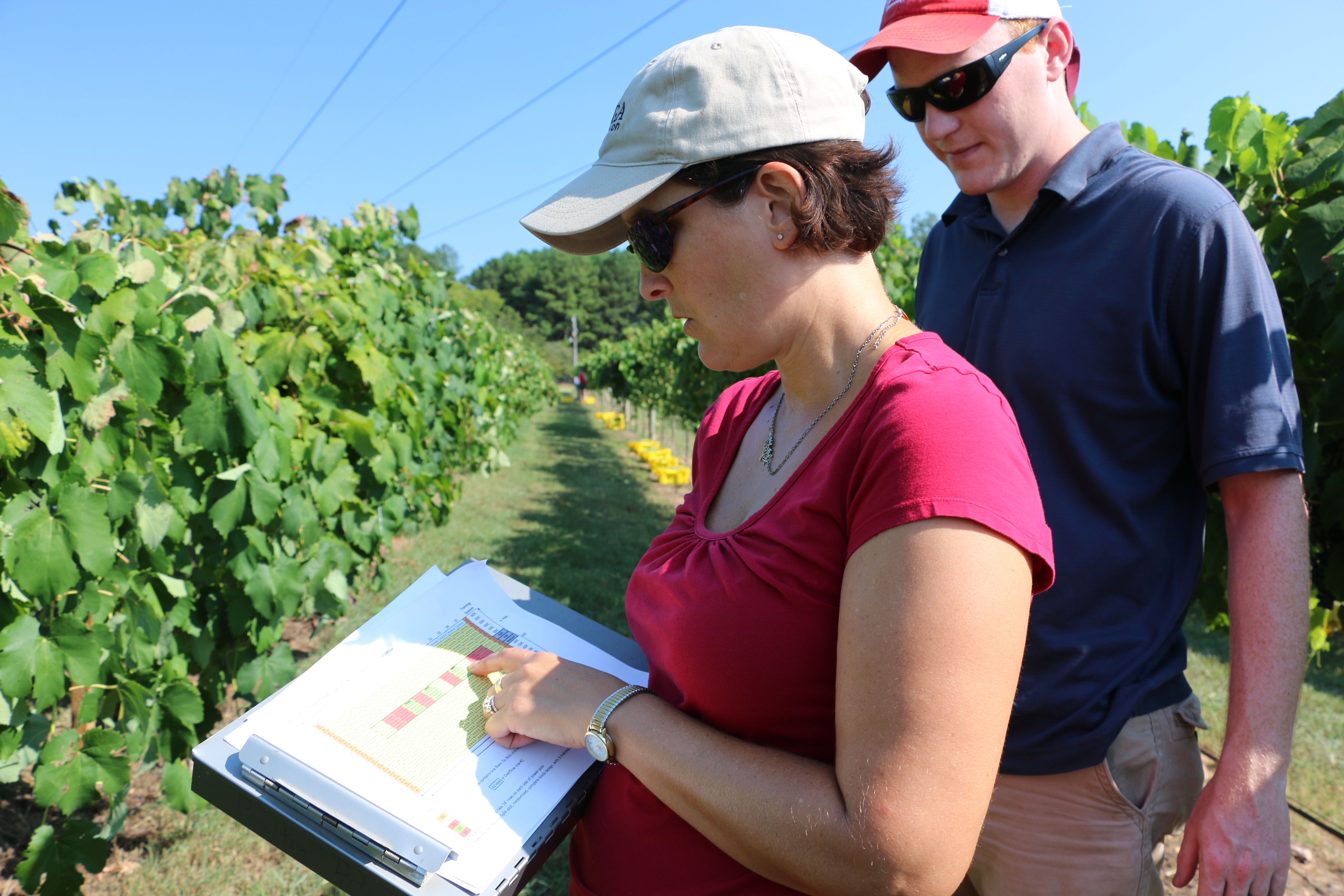 Carroll County UGA Extension agent Paula Burke and UGA Agricultural and Environmental Services Laboratories lab manager Daniel Jackson look over site plans for an experimental plot of wine grapes at Trillium Vineyards in West Georgia.