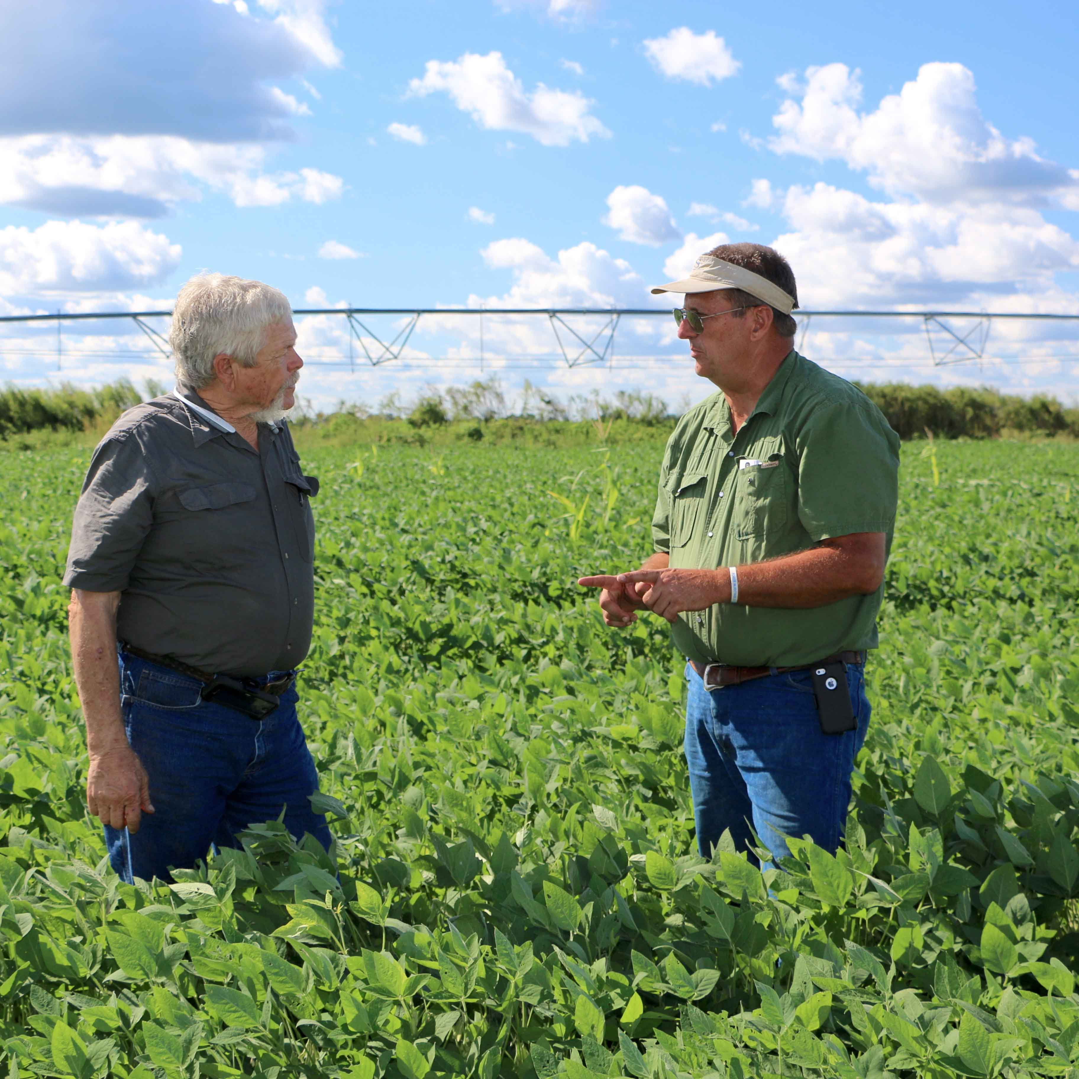 Georgia Farmer of the Year John McCormick examines a soy bean plant with Screven County Extension coordinator Ray Hicks. Hicks and McCormick have worked together for more than 20 years.