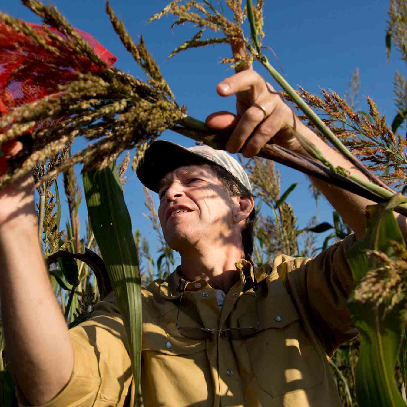 UGA Regents Professor Andrew Paterson is leading an international team working toward sustainable intensification of sorghum production.