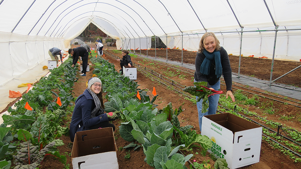 "Students in the University of Georgia College of Agricultural and Environmental Sciences Department of Horticulture's ""Protected and Controlled Environment Horticulture"" class, Candance Young and Donna Nevalainen, harvest vegetables from their high tunnel in December 2016."