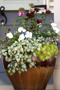 The trailing Orchid Frost lamium, sedum pansies and dianthus create an artistic planter for this Old Town home.