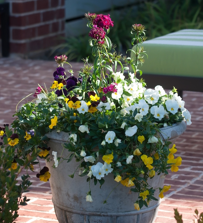 Mixed containers featuring trailing pansies and dianthus make this Old Town patio in Columbus, Georgia, a cool season delight.