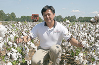 Peng Chee is a cotton breeder on the UGA Tifton Campus.