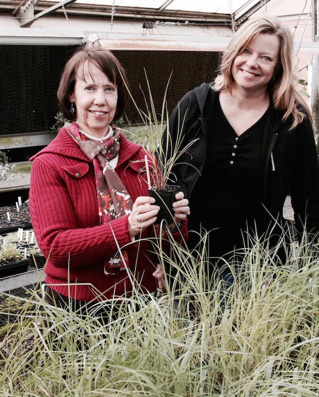 Carol Robacker (left) and Melanie Harrison, both scientists based on the University of Georgia campus in Griffin, Georgia, worked together on a project that resulted in three new little bluestem grasses. Robacker is a horticulturist with the UGA College of Agricultural and Environmental Sciences and Harrison is a scientist with the USDA Plant Genetic Resources Conservation Unit.