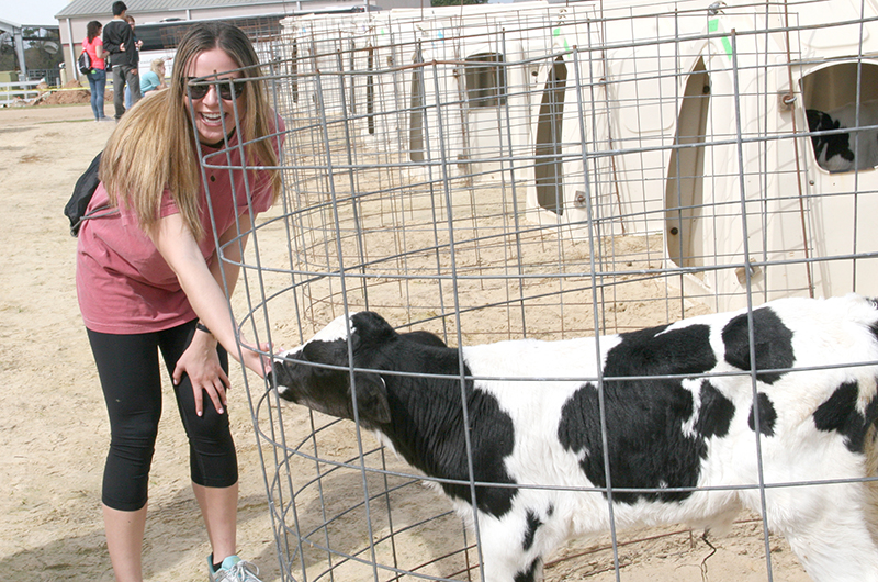Lizzy Isgar meets a cow while on the spring break ag tour at the UGA Tifton Campus.