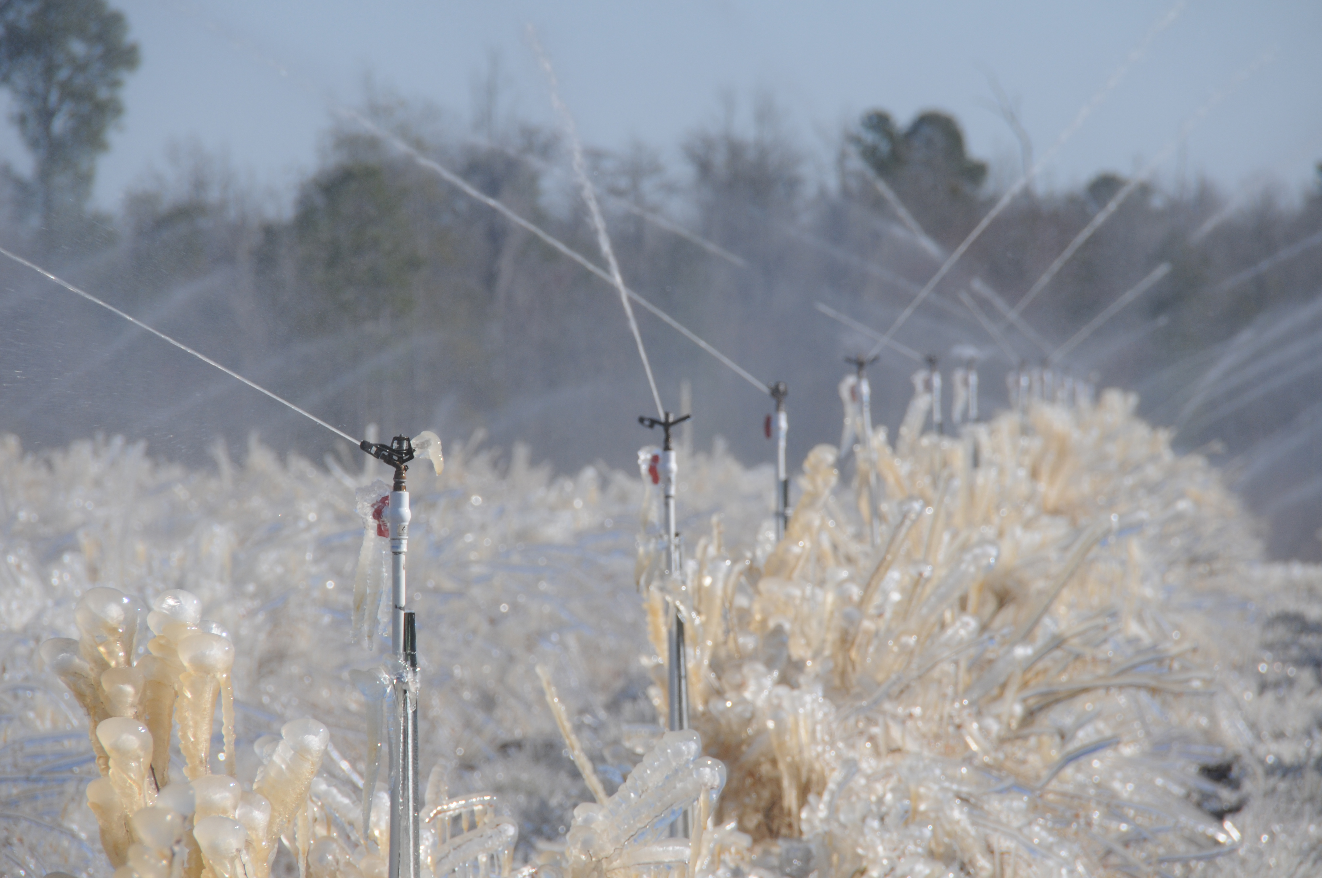 """University of Georgia Cooperative Extension Bulletin 1479, """"Commercial Freeze Protection for Fruits and Vegetables,"""" explains various factors that need to be considered when using overhead irrigation as a frost protection method and references the different stages of development to consider."""
