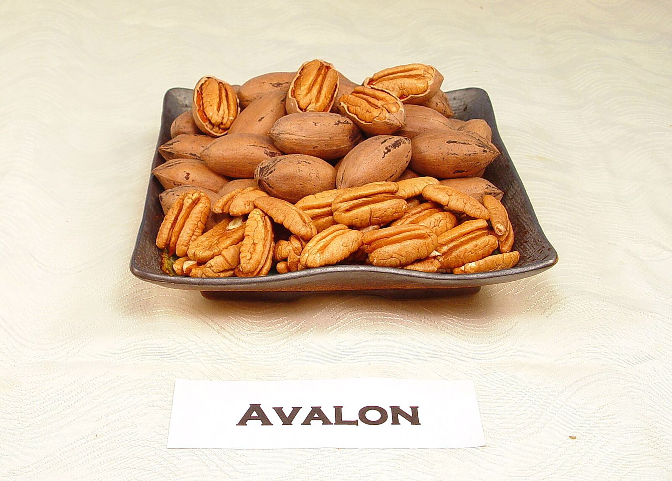 UGA's newest pecan variety, 'Avalon,' in 2017.