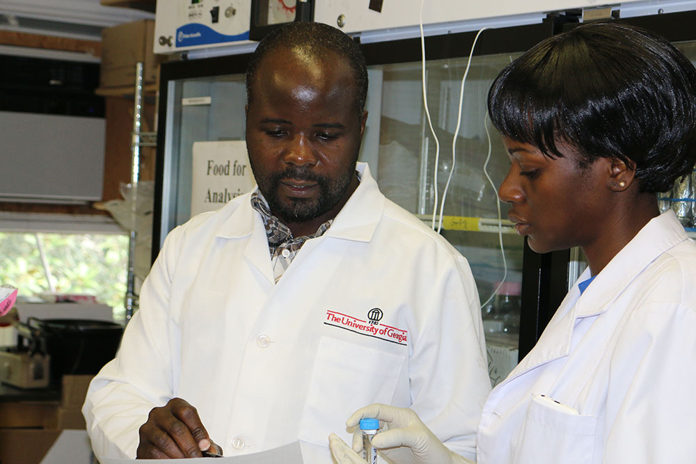 Daniel Mwalwayo, a visiting scientist from Malawi, works with Ruth Wangia in a University of Georgia environmental health lab. Mwalwayo is researching on UGA's Athens and Griffin campuses for 12 weeks on a Borlaug Fellowship, which is funded by the USDA and administered by the UGA CAES Office of Global Programs. (Photo by Allison Floyd.)
