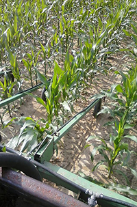 Layby equipment being used in corn.