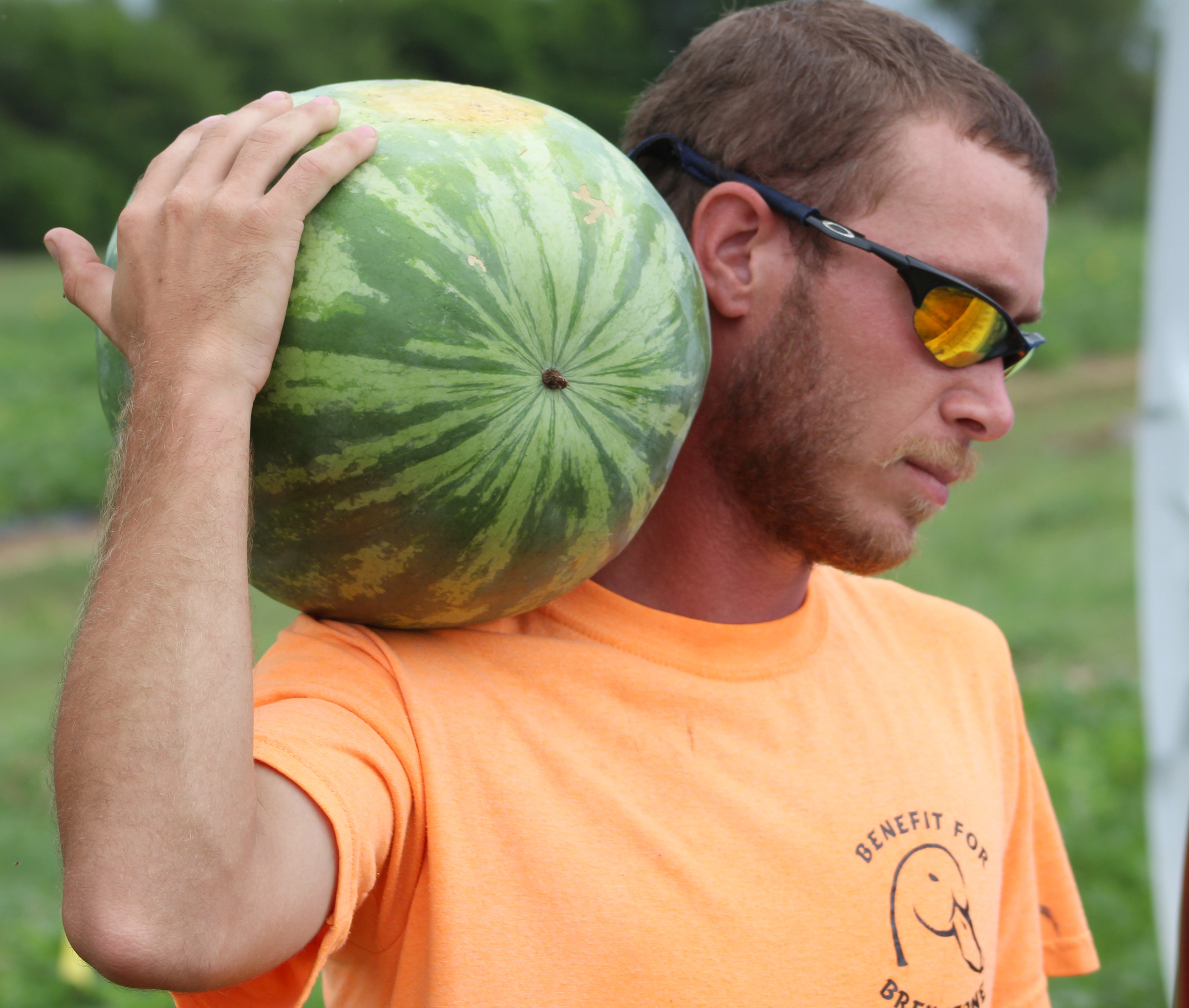 Student worker Kalen Fleming carries a watermelon on the UGA Tifton campus.