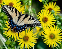 UGA Cooperative Extension is currently recruiting and training citizen-scientists for the Great Georgia Pollinator Census, which will be held August 23-24, 2019. The statewide count will be the first in the state for wild and domestic pollinators.