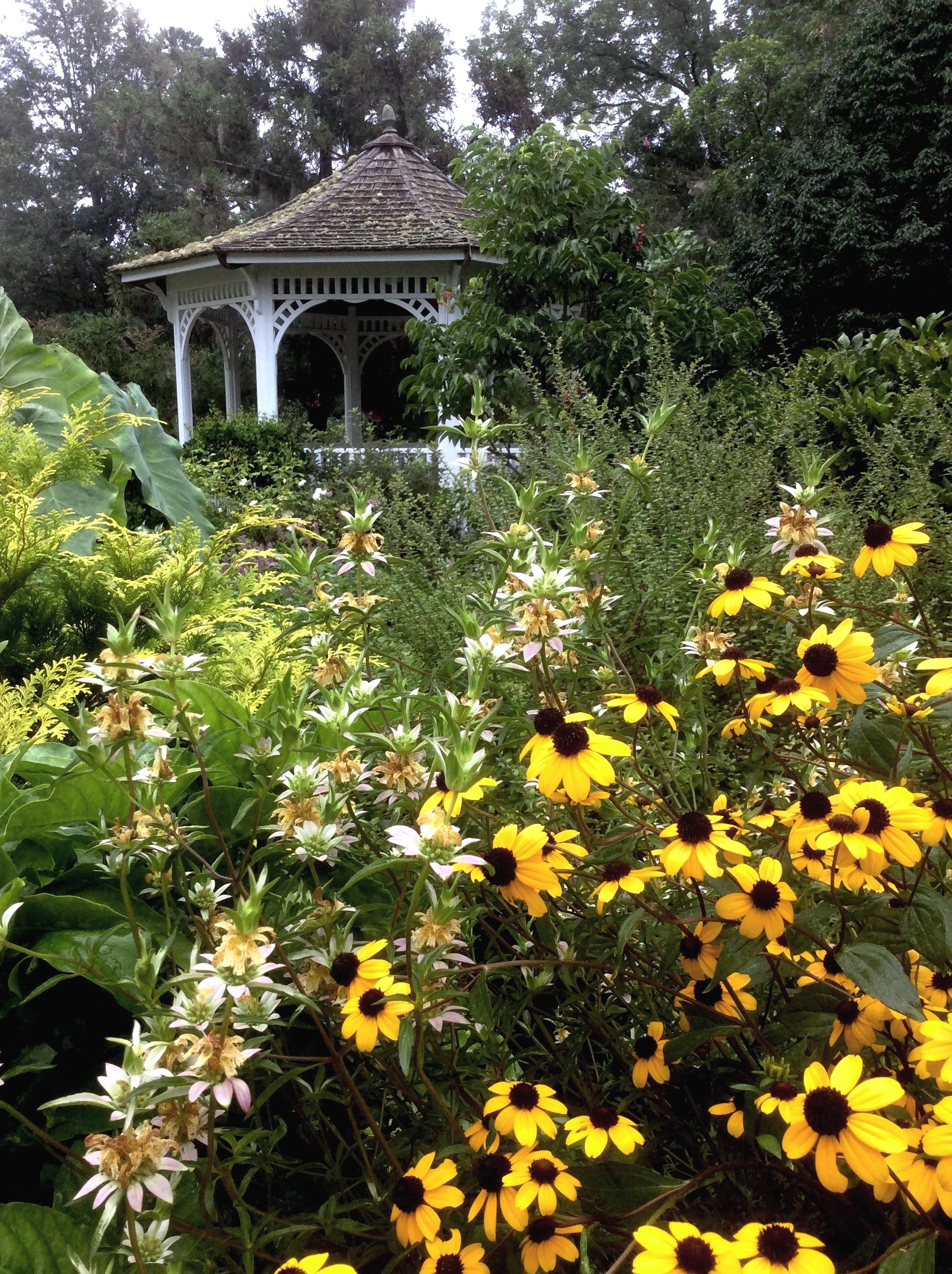 Brown-eyed Susan grows alongside spotted monarda in the Cottage Garden at the Coastal Georgia Botanical Gardens in Savannah.