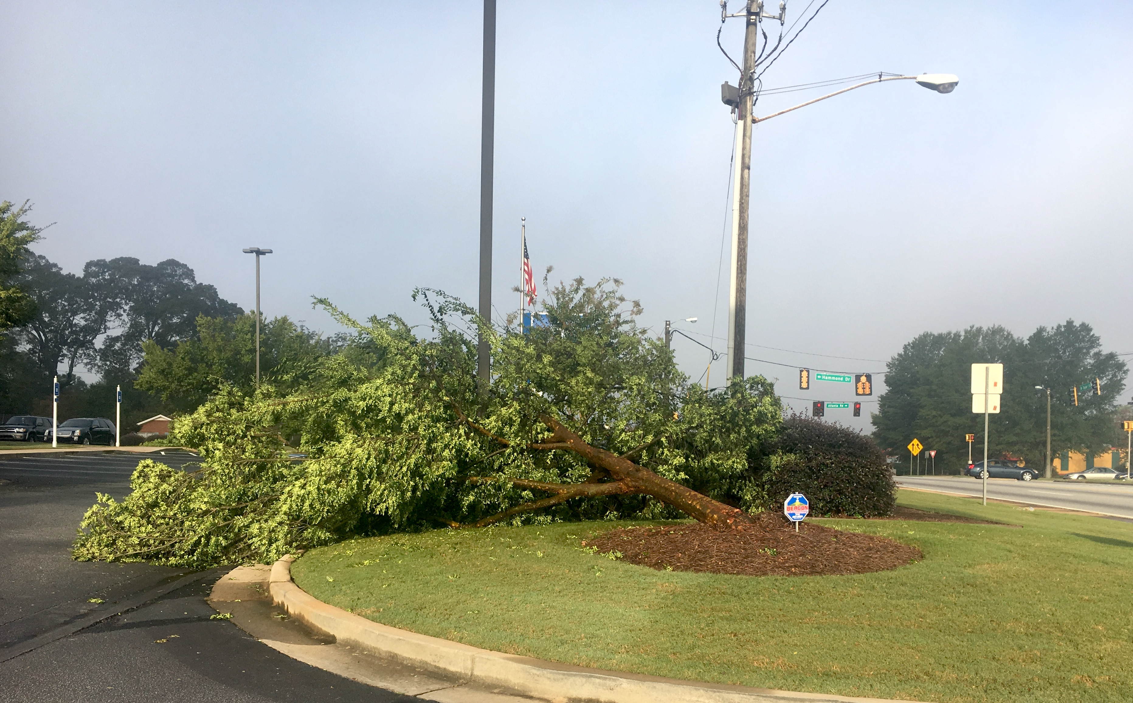 Winds from Tropical Storm Irma uprooted a tree on the lawn of the United Bank in Griffin, Georgia.