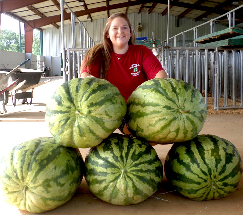 Seminole County, Georgia, 4-H member Kellee Alday won first place in this year's Georgia 4-H Watermelon Growing Contest with a 128-pound 'Carolina Cross' watermelon.
