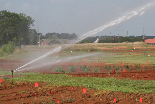 Irrigation of research plots on the University of Georgia campus in Griffin, Ga. Be careful not to apply too much water as it can be just as costly as under watering.