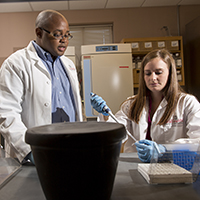 Associate Professor Franklin West (left) and Emily Baker working with induced pluripotent stem cells generated from a patient's own somatic cells.