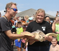 David Weber and Jillian Norrie, environmental educators at Burton 4-H Center, carry a sea turtle back to the ocean as a host of local Tybee Island residents and tourists look on. The turtle, named Zoe by the center's staff, quickly swam out of sight.