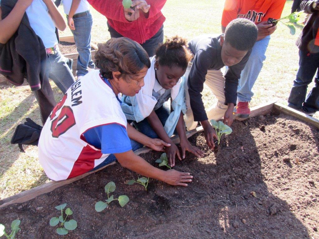 Radium Springs Elementary School Nutrition Manager Theresa Tomblin helps students install plants in the 2016 fall garden at the Albany, Georgia, school. Tomblin is the school's garden liaison and works closely with Dougherty County Extension Coordinator James Morgan.