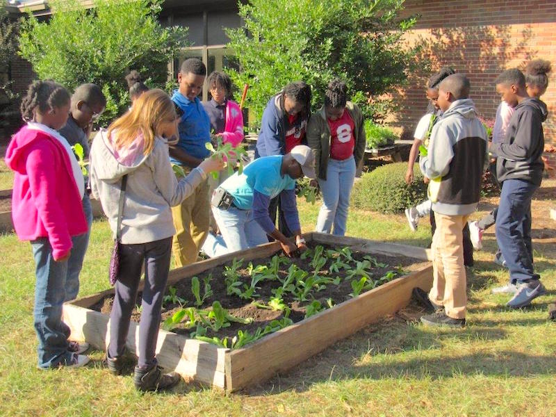 Dougherty County Extension Coordinator James Morgan teaches Radium Springs Elementary school students how to plant fall vegetables. Morgan has been instrumental in the establishment of school gardens at 13 of the 14 elementary schools in Dougherty County.