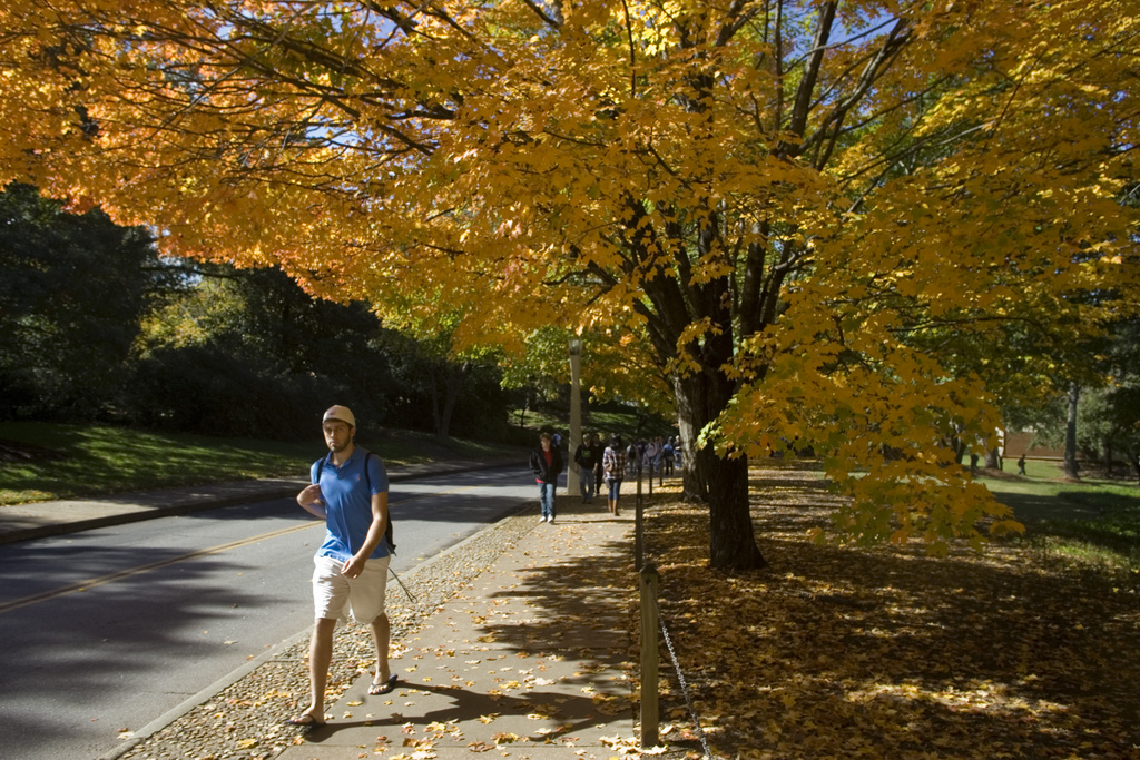 Trees provide energy conservation benefits and offset the urban heat island effect when planted in urban landscapes.