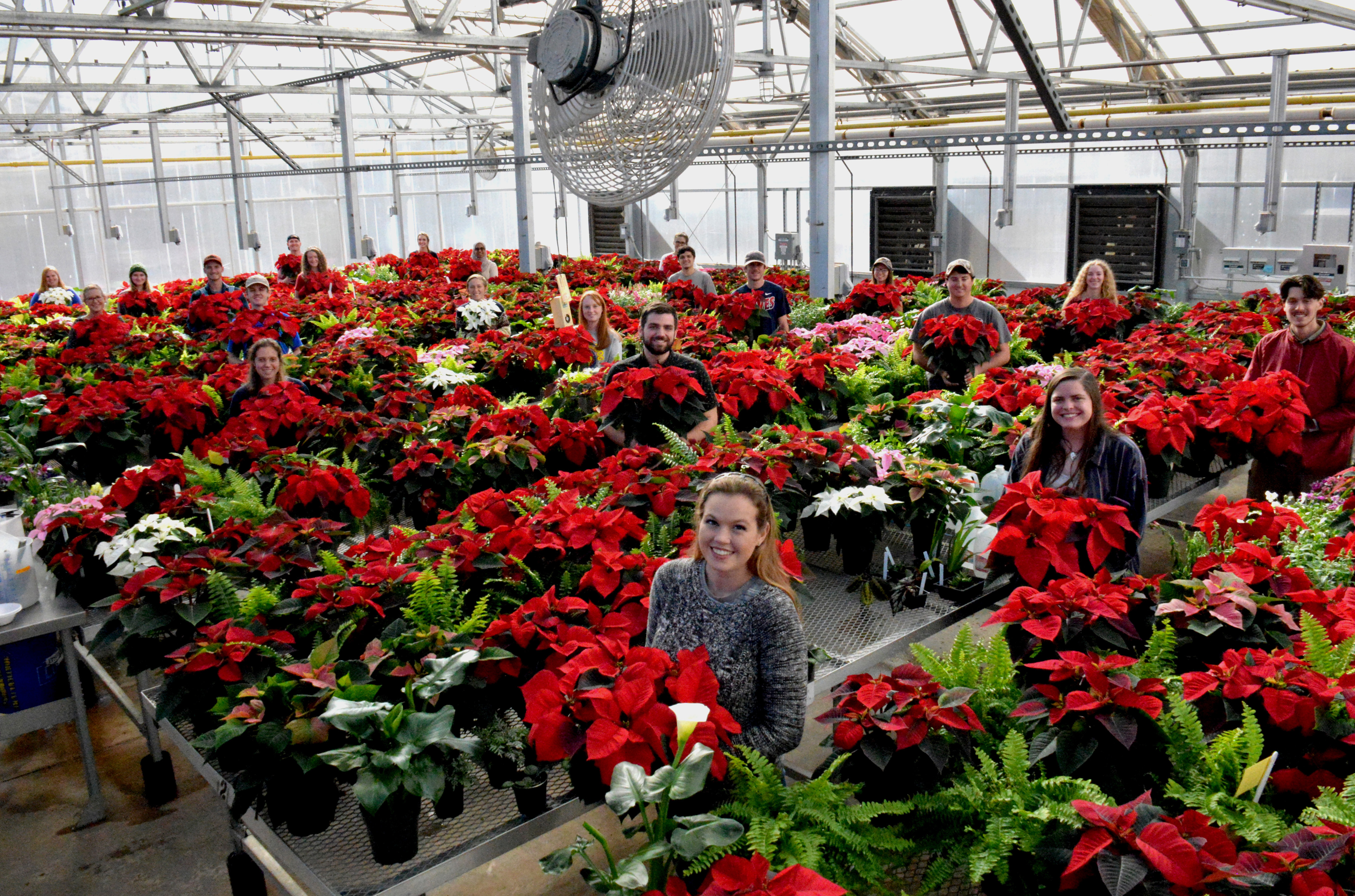 Students in University of Georgia College of Agricultural and Environmental Sciences Horticulture 4070 Greenhouse Management class pose with their bumper crop of poinsettias.