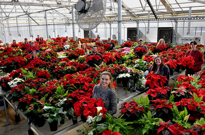 Poinsettias2017