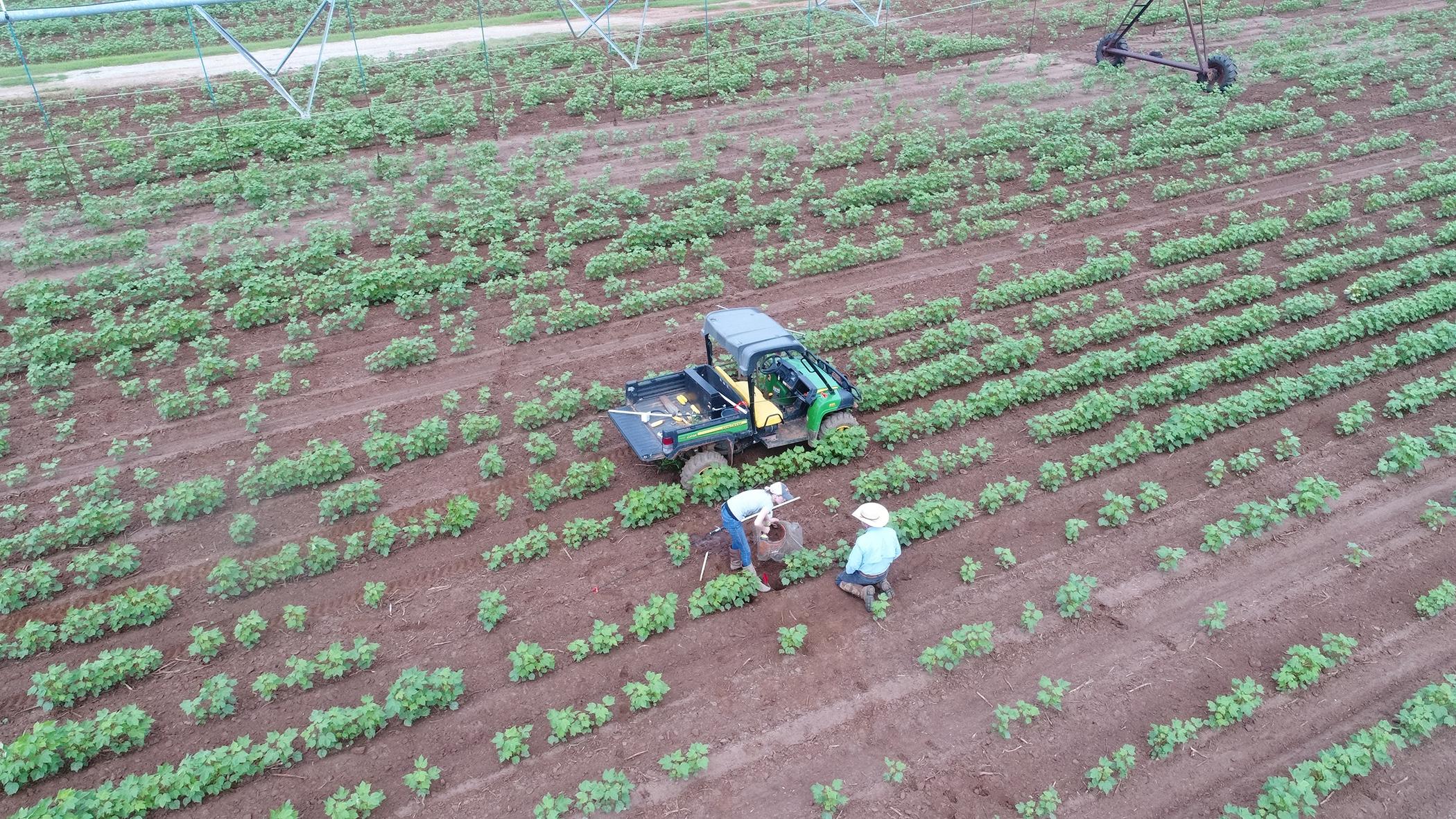 Farmers working their crops on a Georgia farm.