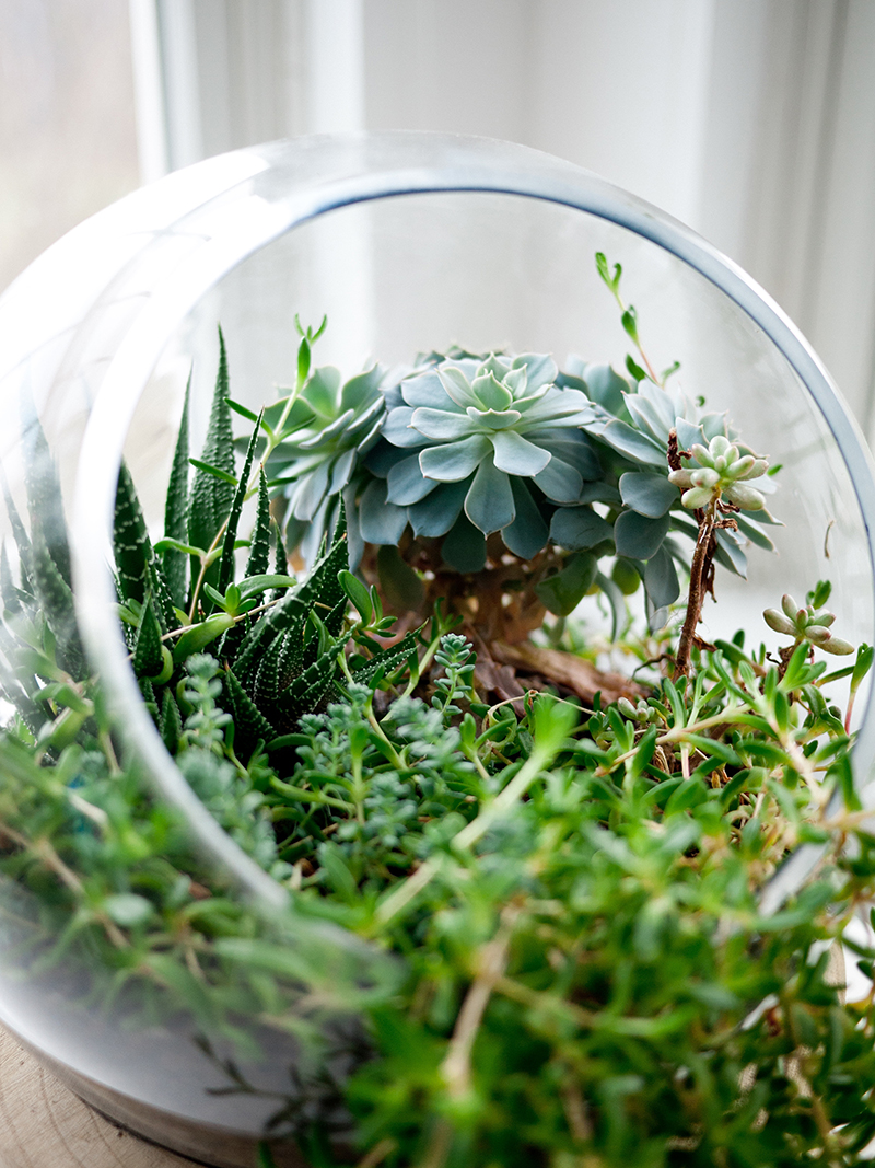 Terrariums are like tiny, desktop greenhouses. The plants grow and change as time goes by, making it a holiday gift that your friend or family member can enjoy all year. You can make terrariums as personal as you want, and even better, as inexpensive as you'd like. All it takes is a little bit of craftiness, plant material and a glass container.
