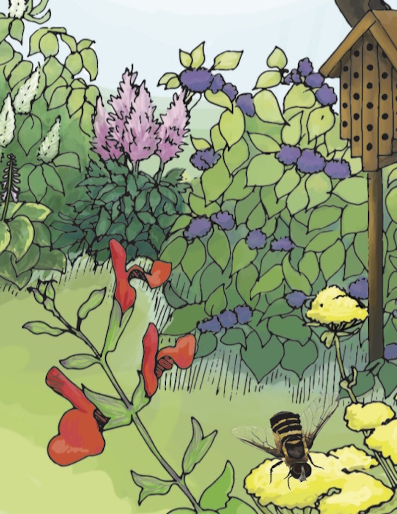 Pollinators are essential to the production of native plants and food crops. To help pollinators like bees and butterflies do their jobs of moving pollen, home gardeners can provide a habitat that provides water and shelter.